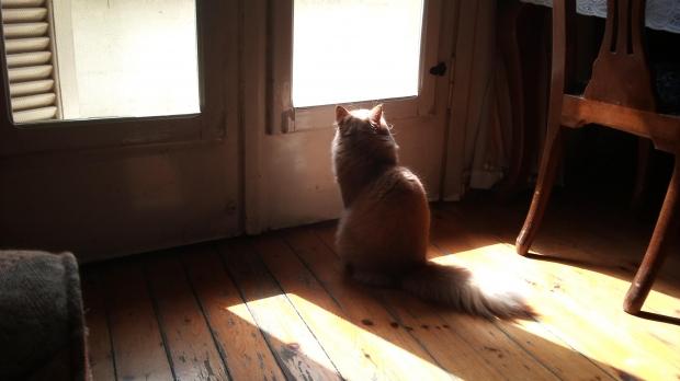 ひどい猫背を治す方法!寝方、タオルで改善のコツ
